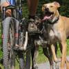 Eine Gruppe von Hunden rennt neben einem Fahrrad her, als Symbol für das Headerbild der Lupologic News