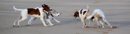 Lupologic-Tierarztpraxis-Verhaltenstherapie