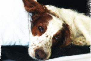 Tieratztpraxis-Lupologic-Schilddruesengesundheit