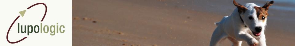 Ein Hund rennt am Strand, als Symbol für das Headerbild der Lupologic Home-Seite.