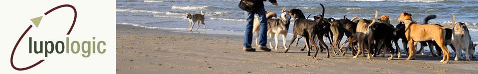 Ein Hunde-Rudel am Strand, als Symbol für das Headerbild von Lupologic Freunden und Partnern