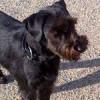 Ein Hund steht auf einem Weg und wirft einen grossen Schatten, als Symbol für das Headerbild der Lupologic Seminar-Seite