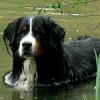 Ein Hund steht im Wasser, als Symbolbild für die Lupologic Über uns Seite.
