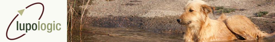 Ein Hund badet im Wasser, Symbol für das Headerbild der Lupologic Bücherseite