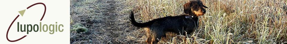 Ein Dackel staht auf der Wiese, Symbol für das Headerbild der Tierarztpraxis Lupologic